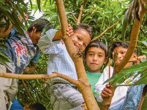 Fünf jungen klettern in einem Baum und haben Spaß.