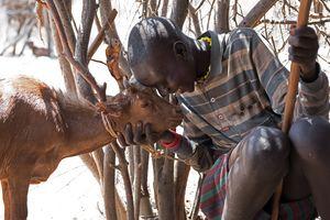 Ziegenhirt mit Ziege, Turkana, Kenia 2/2016
