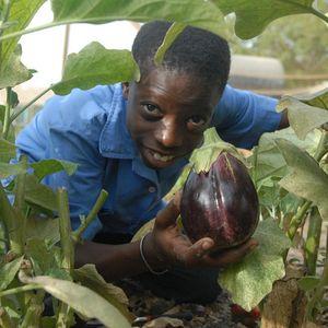 Paul guckt euch ein Dickicht auf Blättern in die Kamera und hält stolz eine selbst angebaute und geerntete Aubergine vor sich.