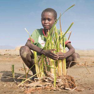 Junge hockt in karger Wüstenlandschaft und umarmt vor ihm wachsende grüne Pflanzensprossen